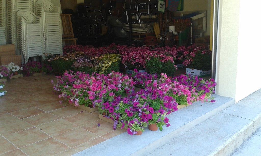 Concurso floral